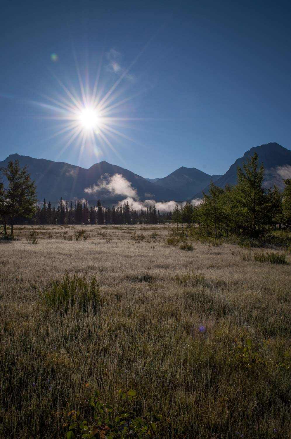 Fall morning on the Kootenay Plains